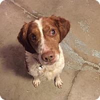 Adopt A Pet :: Rueger - Traverse City, MI