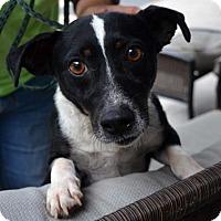Adopt A Pet :: Squirrel - Ridgeland, SC