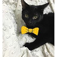 Adopt A Pet :: Tamone - Paducah, KY