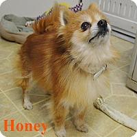 Adopt A Pet :: Honey - Fryeburg, ME