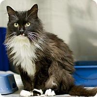 Adopt A Pet :: Sam - Troy, MI
