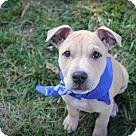Adopt A Pet :: Macaroni