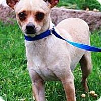Adopt A Pet :: Rango - Gilbert, AZ