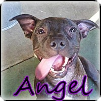 Adopt A Pet :: Angel - Bakersfield, CA