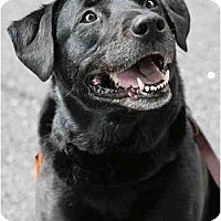 Adopt A Pet :: Shatka - Cumming, GA