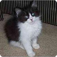 Adopt A Pet :: Stedman - Davis, CA