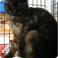 Adopt A Pet :: Julianna - Davis, CA