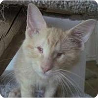 Adopt A Pet :: Natasha - The Colony, TX