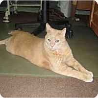 Adopt A Pet :: Gusto AKA Clark - Racine, WI