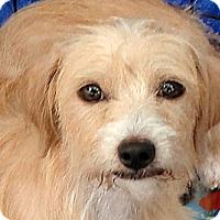 Adopt A Pet :: Sandy - Tumwater, WA