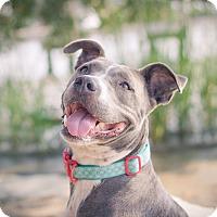 Adopt A Pet :: Annie - Sneads Ferry, NC