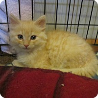 Adopt A Pet :: REGENCY - Acme, PA