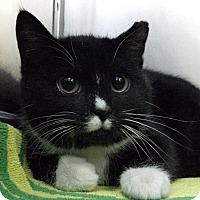 Adopt A Pet :: Alexis Bledel - Richboro, PA