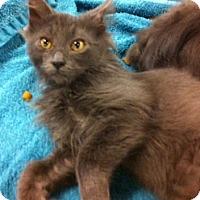 Adopt A Pet :: Seamus - Cocoa, FL