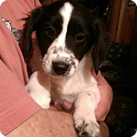 Adopt A Pet :: Murphy - Charlestown, RI
