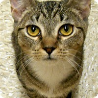 Adopt A Pet :: Tabitha - Chattanooga, TN