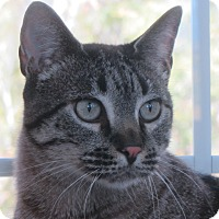 Adopt A Pet :: Scooby - Ridgway, CO