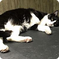 Adopt A Pet :: Tinker - Horsham, PA