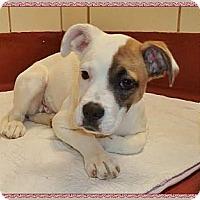 Adopt A Pet :: Pebbles - Jacksonville, AL