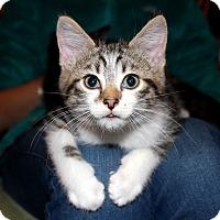 Adopt A Pet :: Clifford - Fairfax, VA