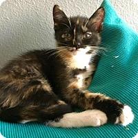 Adopt A Pet :: CeCe - Walnut Creek, CA