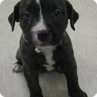 Adopt A Pet :: Ronda - Gary, IN
