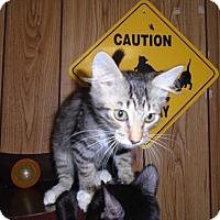 Adopt A Pet :: Kitten 14006 - Parlier, CA
