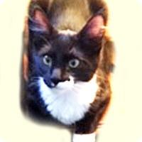 Adopt A Pet :: Riley - El Dorado Hills, CA
