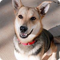 Adopt A Pet :: Macie - Youngsville, NC