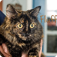 Adopt A Pet :: Fluffy - Somerset, PA