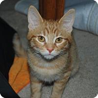 Adopt A Pet :: Razzle - Alameda, CA