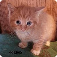 Adopt A Pet :: GORDON - Golsboro, NC