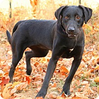 Adopt A Pet :: Molly - Pegram, TN