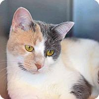 Adopt A Pet :: Babbie - Sierra Vista, AZ