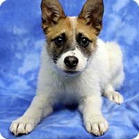 Adopt A Pet :: ZURIN - Westminster, CO