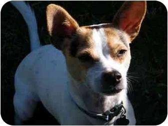 Dingo In Sa Adopted Puppy San Antonio Tx Jack