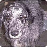 Adopt A Pet :: Noah - New Kensington, PA