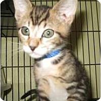Adopt A Pet :: Buster - Shelton, WA