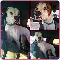 Adopt A Pet :: Gretchen - Scottsdale, AZ
