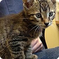 Adopt A Pet :: Flapjack - Secaucus, NJ