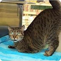 Adopt A Pet :: Miya - Fort Lauderdale, FL