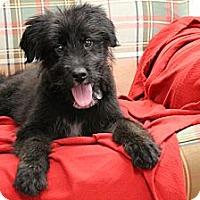 Adopt A Pet :: Flynn - Homewood, AL