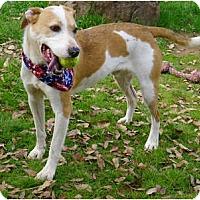Adopt A Pet :: Charlie plays fetch - Sacramento, CA