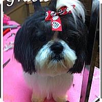 Adopt A Pet :: Gracie - Rockwall, TX