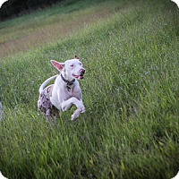 Adopt A Pet :: Pinola - Russellville, KY