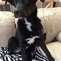 Adopt A Pet :: Tessa - Saskatoon, SK