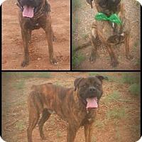 Adopt A Pet :: Gator - Alamogordo, NM