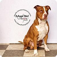 Adopt A Pet :: Dopey - Apache Junction, AZ