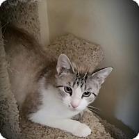 Adopt A Pet :: Cherokee - Fairborn, OH