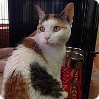 Adopt A Pet :: Adele - River Edge, NJ